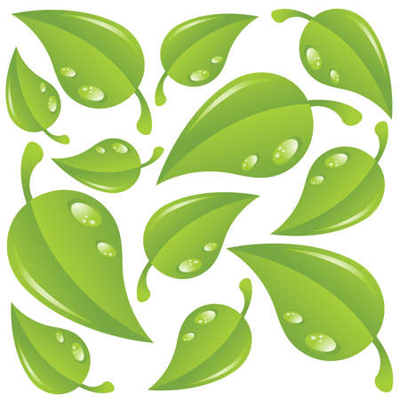 Green leaves with water drops isolated over white Stock Vector - 9565381