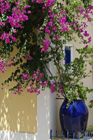 Big blue vase with pink geraniums in front of yellow house. Stock Photo