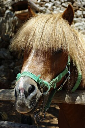 Head of pony horse behind fence at farm at sunny summer day.