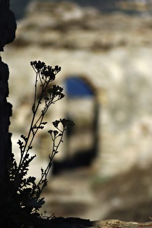 Wild flower silhouette against blurred wall of Methoni Castle at sunny summer day. Stock Photo