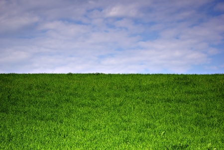Meadow landscape at sunny summer day, fresh green grass and cloudy sky  Stock Photo