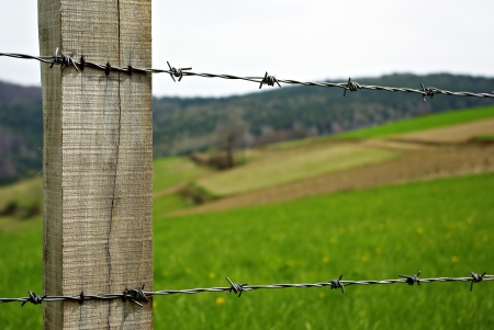 Green grass meadow at sunny summer day, wooden pole and barbed wire  Stock Photo