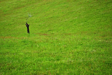 Meadow, fresh green grass, wild flowers, lonely stump with few leafless branches at spring day  Stock Photo