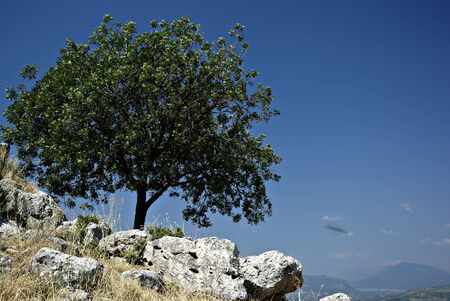 Lonely tree on the rocks against the clear blue sky on a sunny summer day  Stock Photo