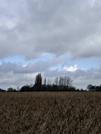Crop field with stormy cloudy sky in background