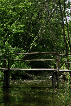 Old primitive wooden bridge on footpath trough wild forest at summer sunny day  photo