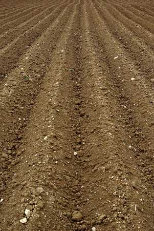 The furrows in the field of arable land ready for spring planting.
