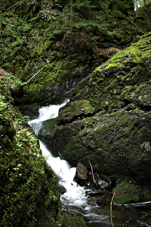 Mountain stream flowing through moss covered rocks in the forest. Stock Photo