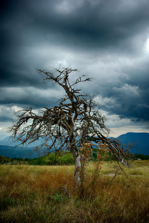 Dry leafless tree at field with high dry grass against dark stormy sky.