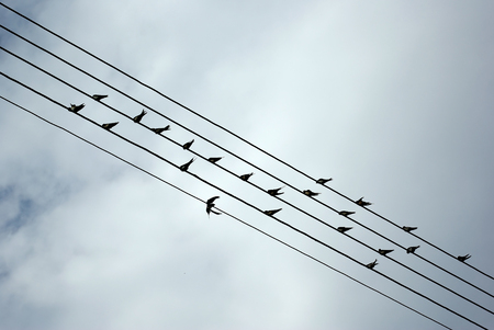 Birds resting on electrical wires against clear blue sky.