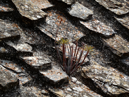 Wild flower grows between roof stones at sunny summer day.