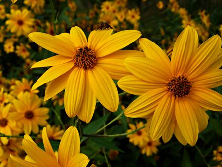 Yellow flowers at bright sunny summer day.