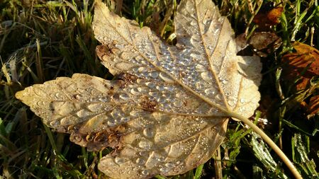 water drops on leaf: Leaf with water drops