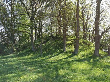 heuvel met boom