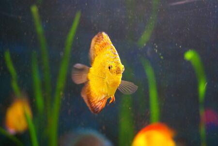 Doctor fish Banco de Imagens