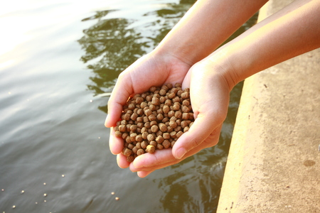Fish feed Stock Photo