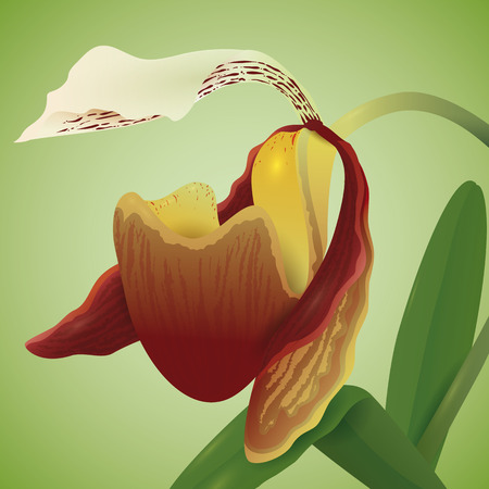 Exotic flower with pouch of the orchids family isolated in soft green background. Illustration