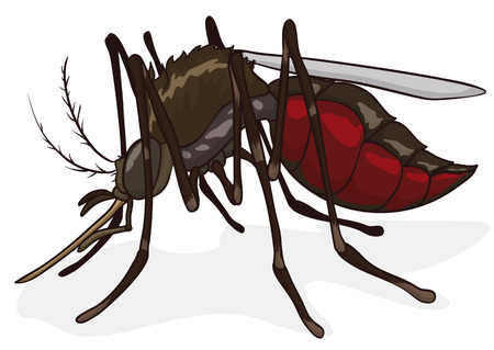 Female mosquito with its abdomen full of blood in cartoon style isolated.