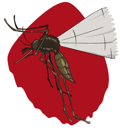 Hungry female mosquito looking for its victims to bloodsucking in a red background.