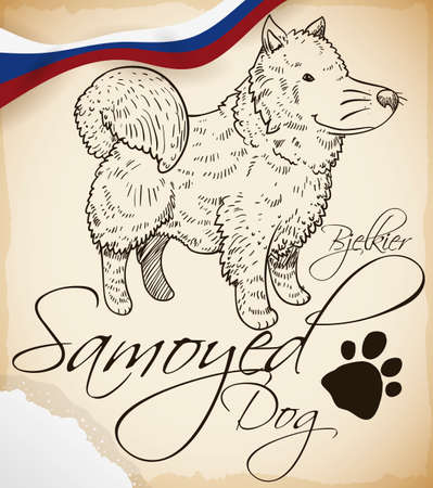 Samoyed dog -or Bjelkier- in hand drawn style in a scroll, some of snow in a corner, Russian ribbon and the dog signature: a paw print.