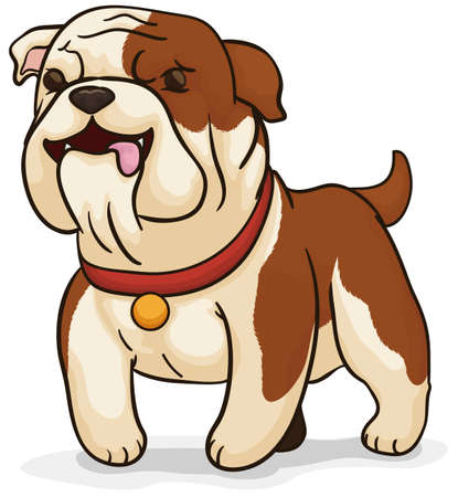 Cute English bulldog wearing a collar with golden tag, guarding the house and keeping and an eye for its owner. Stock Illustratie