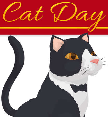 Elegant white and black cat with beautiful fur like a distinguished tuxedo ready to celebrate Cat Day.