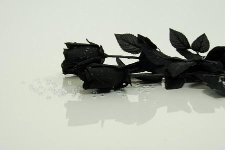 endings: Black rose symbolizing endings and death Stock Photo