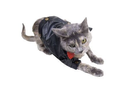 Cat on the prowl wearing a black leather coat that goes with every outfit Stock Photo - 5621378