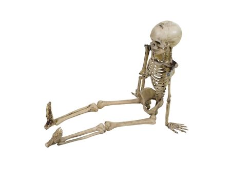 sit: The skeleton is the internal framework of the body in a sitting position  Stock Photo