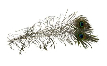 Colorful peacock feathers with the illusion of an eye at the tip