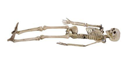 スケルトンは、身体の内部のフレームワーク 写真素材