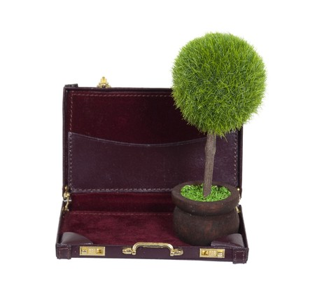 Green business shown by a large potted tree in a briefcase Stock Photo - 7383719