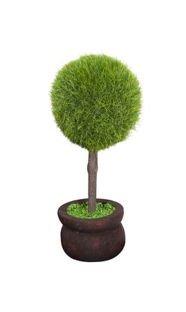 Green large potted tree   Imagens