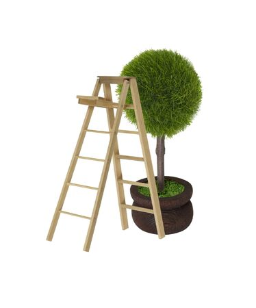 boughs: Tree with a ladder used for reaching the upper boughs -