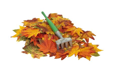 rake: Metal rake on a pile of colorful fall leaves