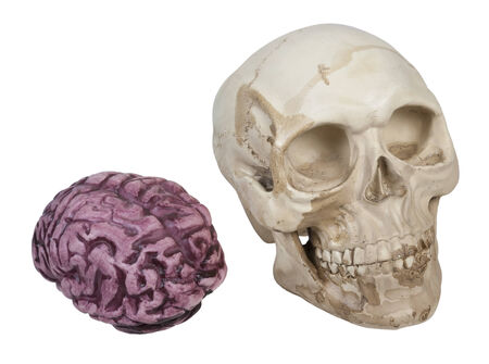 Skull with eye sockets and teeth and brains - path included Stock Photo