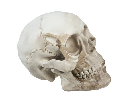 Skull with eye sockets and teeth and cranial lines - path included