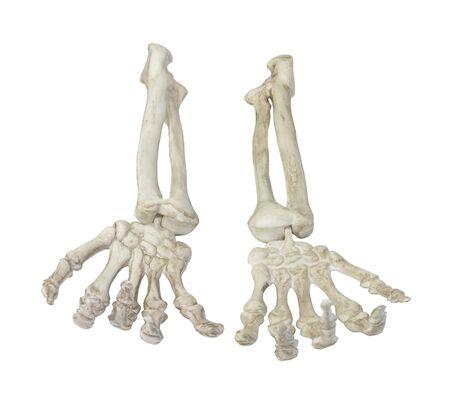 Skelet handen palmen naar u toe - pad inbegrepen