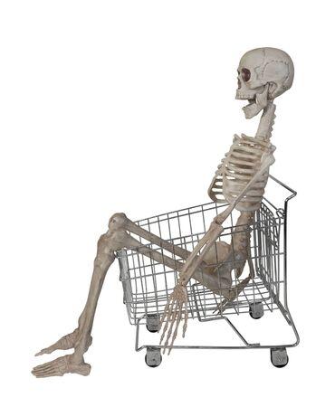 The skeleton is the internal framework of the body