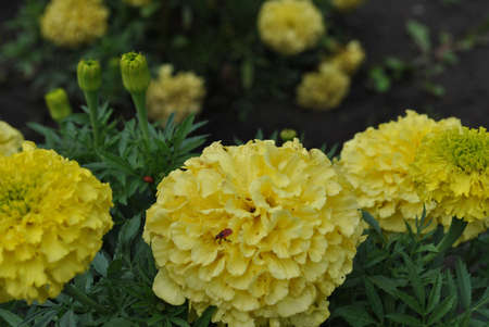 flowerses: Several yellow flowerses, photo Stock Photo