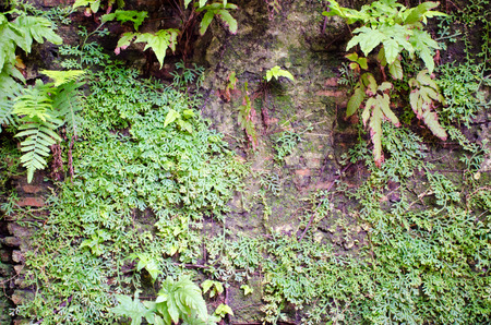 old wall with fern and tropical plants photo
