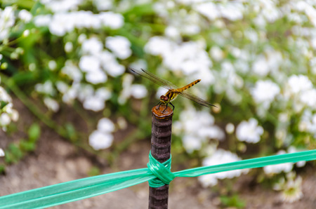 a dragonfly on steel rod photo