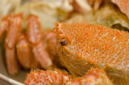 hairy closeup: Chinese mitten crab or Shanghai hairy crab closeup