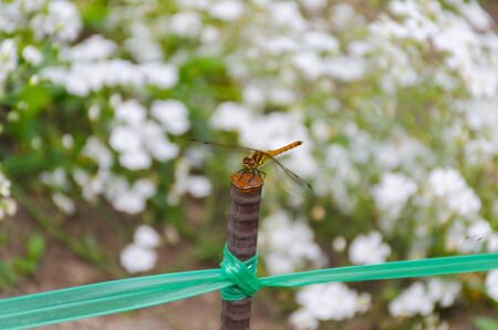 dragon fly on the rod in flower garden photo