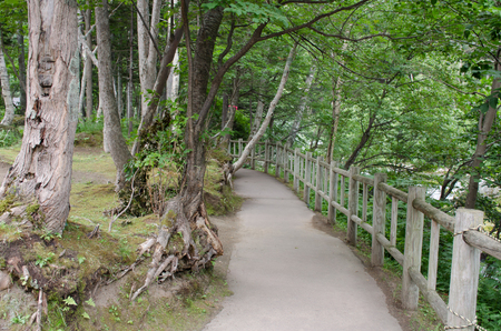 Pathway in the forest of Hokkaido ,Japan