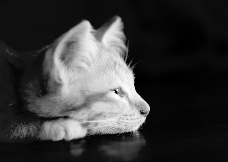 monk robe: Orange sleepy kitten cat lie on wood ground closeup on its face  on wooden floor with monk robe on background lowkey black and white