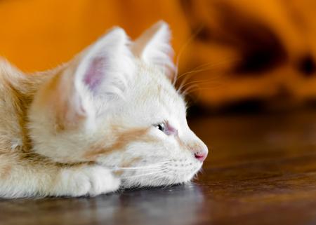 monk robe: Orange kitten cat lie on wood ground closeup on its face  on wooden floor with monk robe on background