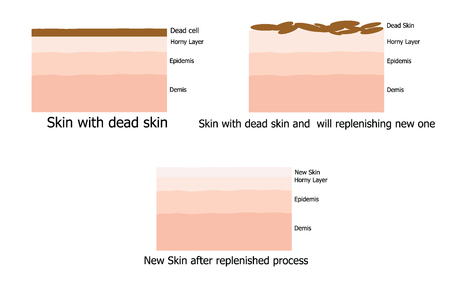 replenishing: Infographic about Skin replenishing process since dead skin to new one Illustration