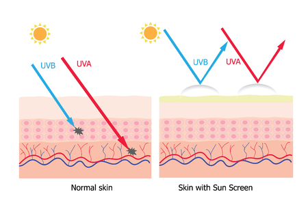 uva: Infographic about sunscreen lotion protect human skin from UVA , UVB ray  sunscreen product with aura protection