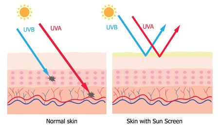 Infografía sobre loción de protección solar a proteger la piel humana contra los rayos UVA, UVB producto de protección solar de rayos